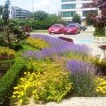 Цветя и храсти