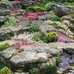 Скална градина с билки