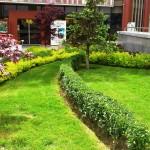 Трева и храсти