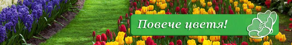 цветя-1024x161