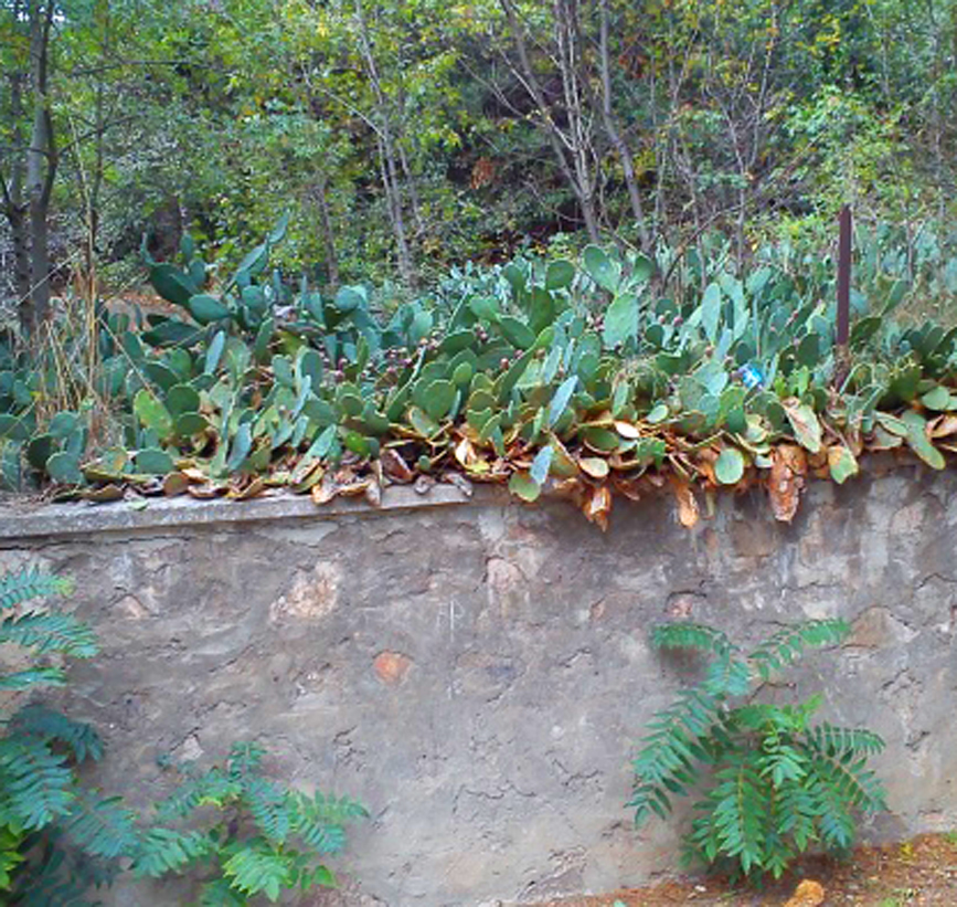 Какие кактусы цветут  domklumbaru