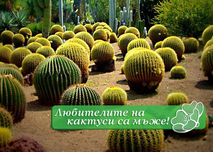 Любителите на кактуси са мъже