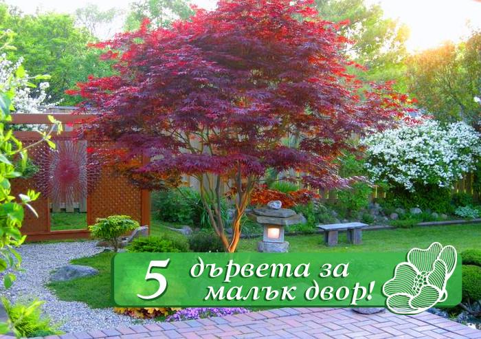 5 Прекрасни дървета за малък двор – част 1