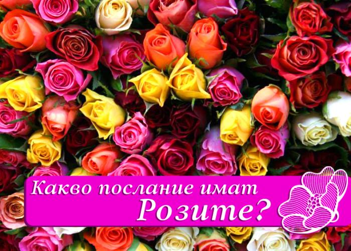 Какво символизира цвета на розата?