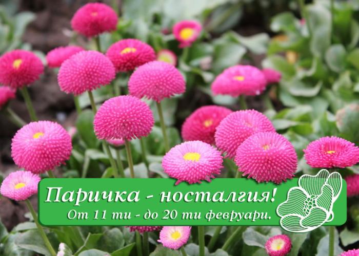 Паричка – Носталгия /11. 02 – 20. 02./
