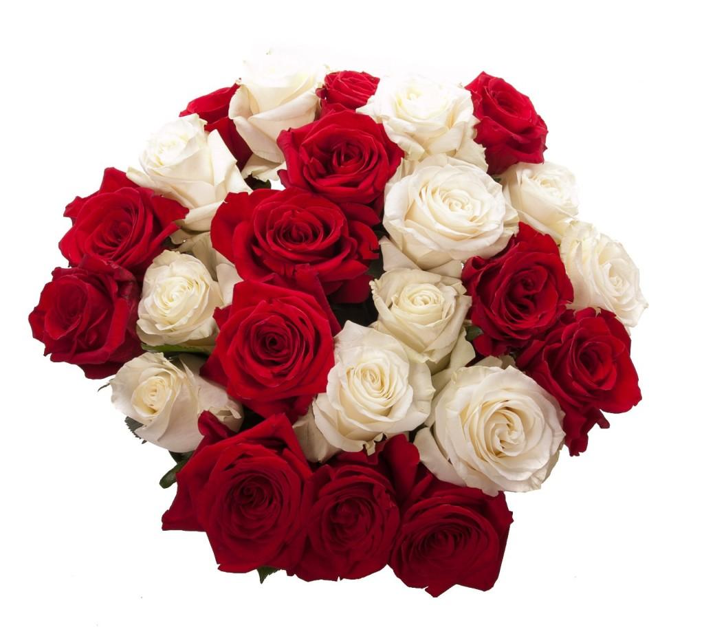 червени и бели рози - единство
