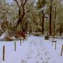Park Vrana – Парк Врана (23)