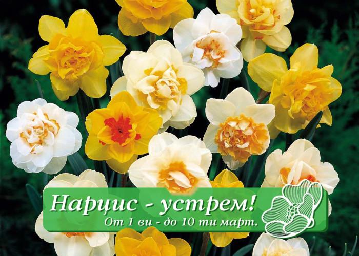 НАРЦИС – устрем /1.03 – 10.03/