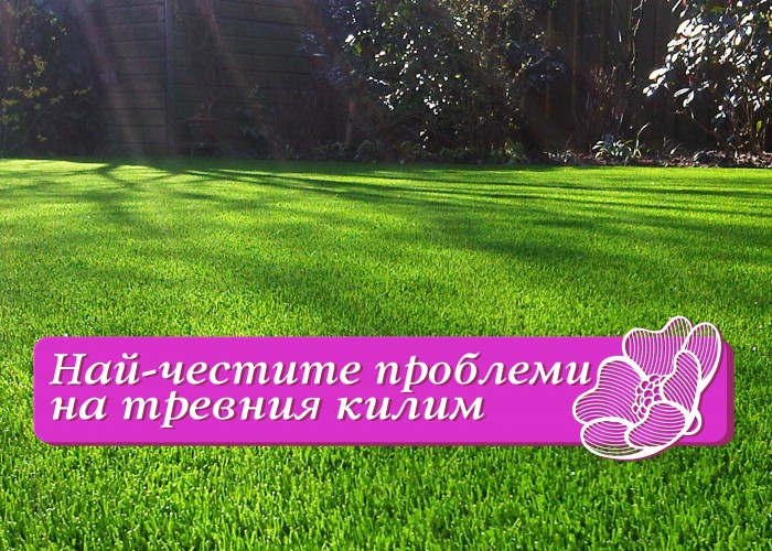 6 полезни съвета за зеления килим