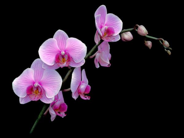 Орхидеите обичат сутрешно слънце
