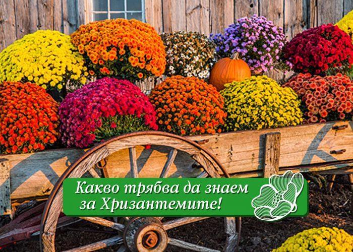 Топли и пламенни цветя за настроение в градината.