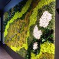Скандинавски мъхове и зелени стени – Reindeer moss (68)