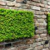 Скандинавски мъхове и зелени стени – Reindeer moss (73)
