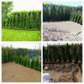 Озеленяване на зелени площи